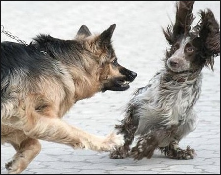 Understanding and Helping your Reactive Dog