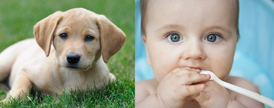 Dog Blog: Puppies VS. Newborn Babies