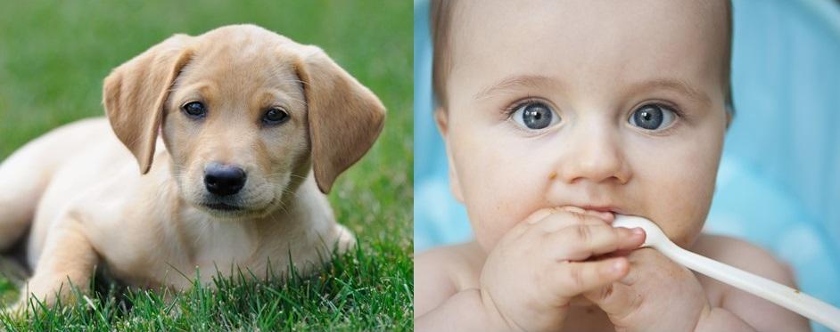 Dog Blog: Puppies VS. Newborn Babies