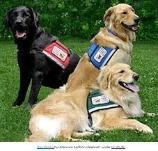Dog Blog: Service Dog In Crisis by Shannon Coyner