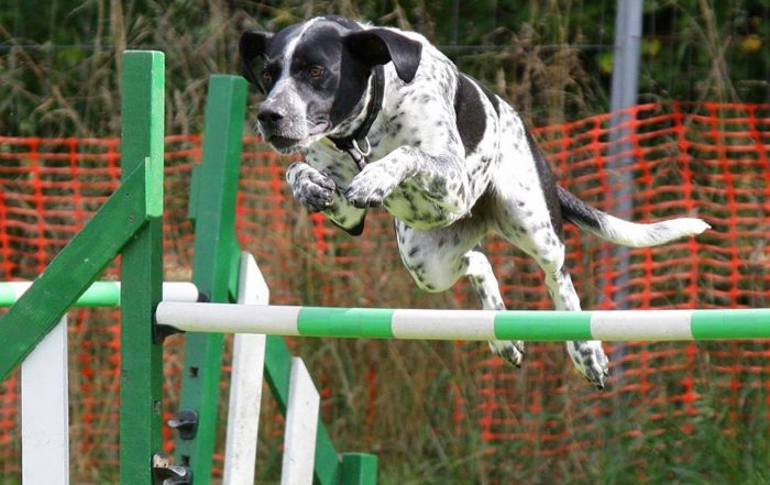 At-Home Dog Agility Courses