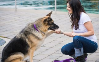 Practice skills with your dog